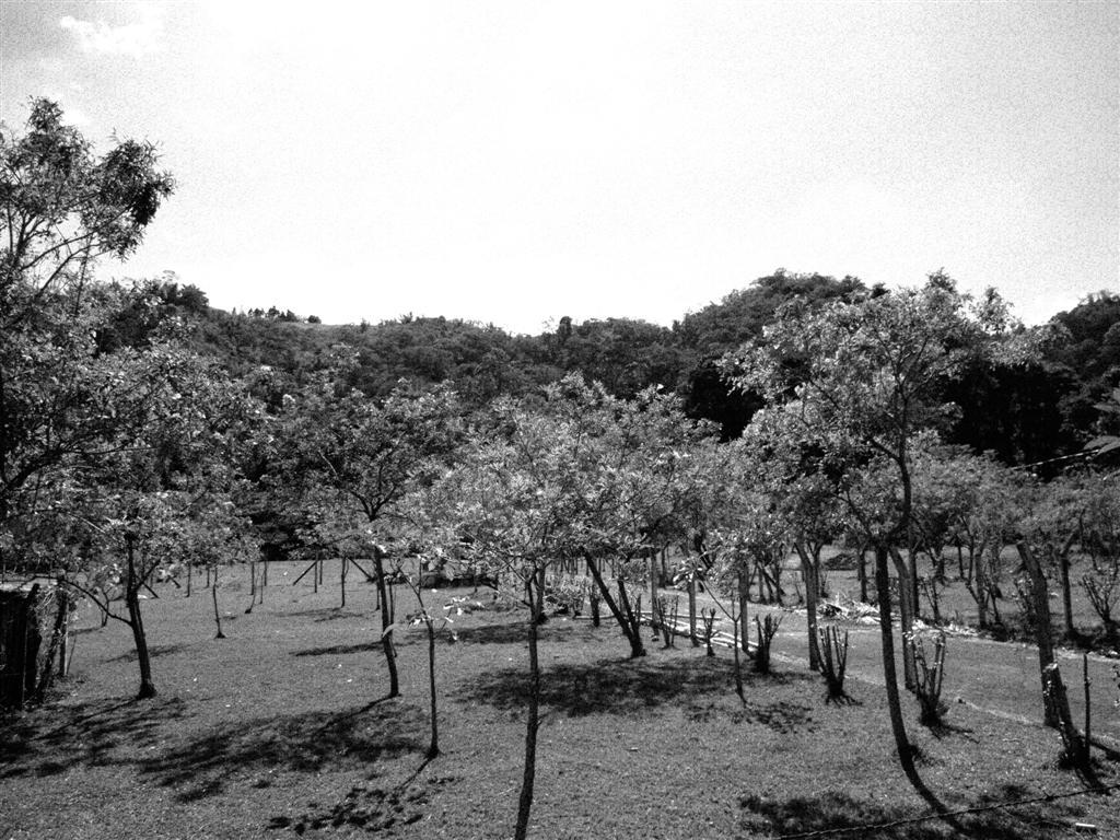 elsa2010-871
